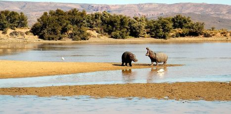 The last time Earth was this hot hippos lived in Britain (that's 130,000 years ago) | Développement durable et efficacité énergétique | Scoop.it