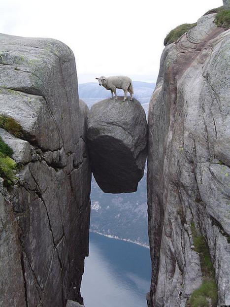 Mais que fait ce mouton sur cet étonnant rocher? | Esther Coronel de Iberkleid Articles | Scoop.it