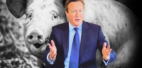 What #PigGate Really Says About the State of British Politics | Psycholitics & Psychonomics | Scoop.it
