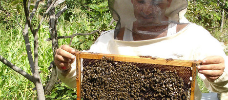 100,000+ #Beekeepers From #Germany Demand #GMO Ban #Bees | Messenger for mother Earth | Scoop.it