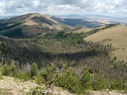 Increasingly severe disturbances weaken world's temperate forests | GarryRogers NatCon News | Scoop.it
