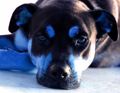"""36 """"Old Dog Blue"""" by JimJackson 