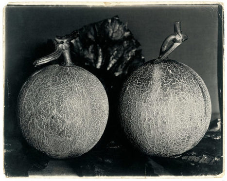 The Rediscovered 19th-Century Vegetable Photographs of Charles Jones | De Natura Rerum | Scoop.it