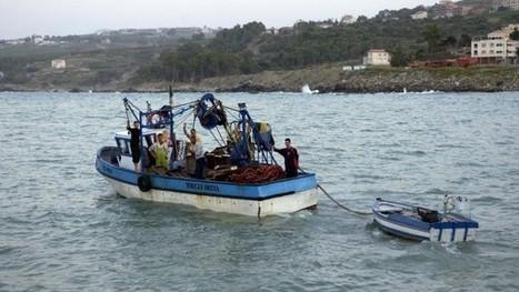Pourquoi le poisson coûte cher en Algérie | CIHEAM Press Review | Scoop.it