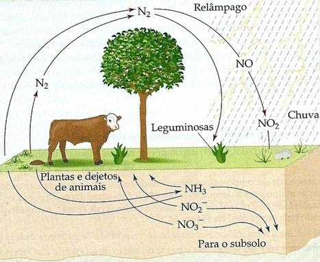 Aula 23 | biologia - aulas | Scoop.it