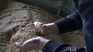 EU Farmers Boost Global Grain Supplies | The Authentic Food & Wine Experience | Scoop.it