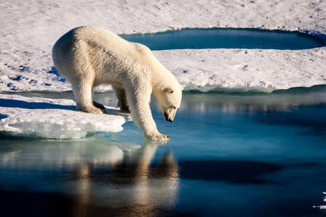 Potential 'hot-spots' for sea ice melting identified in the Arctic Ocean   NERC media coverage   Scoop.it
