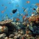 Coral Reef Biome | Coral Reef | Scoop.it