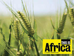 Special Report on Agriculture: Realizing Africa's Potential #AR&D; Agric is the future of Nigeria http://skollworldforum.org/2013/08/08/agriculture-is-the-future-of-nigeria #Nigeria @FmardNg | Agriculture, Climate & Food security | Scoop.it