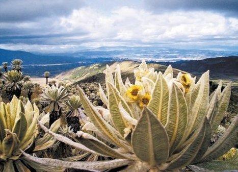 Aliados por los páramos de los Andes del Norte | Agua | Scoop.it