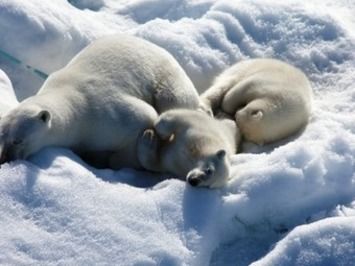 """To the Artic"" 3D is Filled with Adorable Animals Surviving Climate ... 