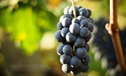 Vino naturale, biologico o biodinamico: che differenza c'è? | Wine, history and culture... | Scoop.it