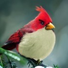 real life angry birds   Visual Inspiration   Scoop.it