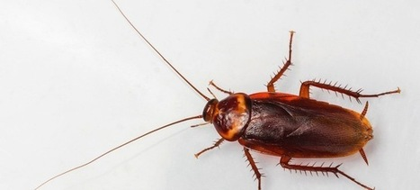 DNA Nanobots Turn Cockroaches Into Living, 8-Bit Computers | my english page wouter otten | Scoop.it