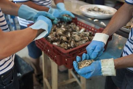 Les huîtres fortement affectées par l'acidification des océans | Toxique, soyons vigilant ! | Scoop.it