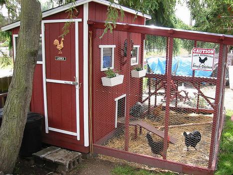Chicken Coops - a gallery on Flickr | Urban Farm | Scoop.it