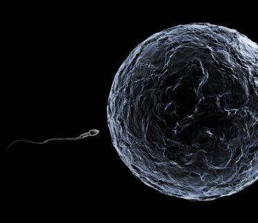 calcul ovulation et grossesse | Maison et Santé | Scoop.it