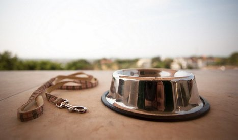 Sunday's Recap: 7 Resources To Help You Deal With the Loss of A Pet | Top Dog Tips | Grief & Bereavement Counseling | Scoop.it