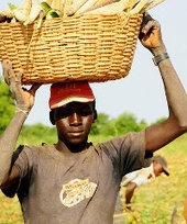 Five regulatory barriers undermining intra-African food trade | Food Security | Scoop.it