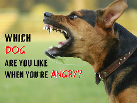 Which Dog Are You Like When You're Angry? | Dog Lovers | Scoop.it