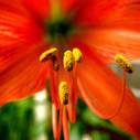 Simple Things You Should Avoid When Suffering With Allergies | drosbornegluten6 | Scoop.it