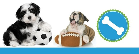 Things to Consider Before You Quit Your Job for a Pet Franchise - Splash and Dash - Pet Store Franchise | SEO and Social Media Business Resources | Scoop.it