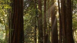 Teach The Forest | Urban, Suburban, and Campus Forests: Conservation and Curation | Scoop.it