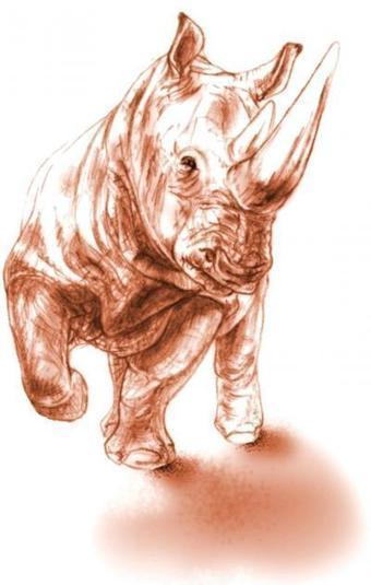 Rare rhino fossil preserved by prehistoric volcanic eruption ... | Palaeontology News | Scoop.it