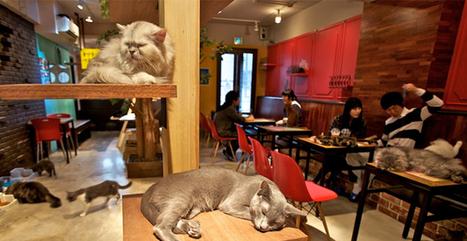 Il primo Neko Café - Cat Cafè italiano. A Torino.   TORINO   Scoop.it