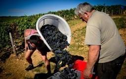 French Wine Tasting Bike Tour in Burgundy   Adventure Travel Blog - DuVine Adventures   Wine cellar   Scoop.it