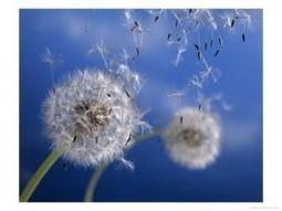 Cloud Computing Solution Bay Area | Cloud solutions | Scoop.it