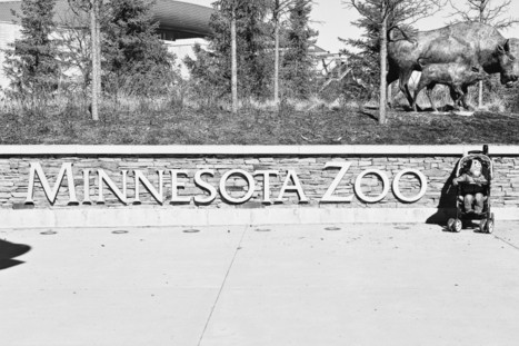 Our trip to the Minnesota Zoo   Everyday Trish   Everyday Trish   Scoop.it
