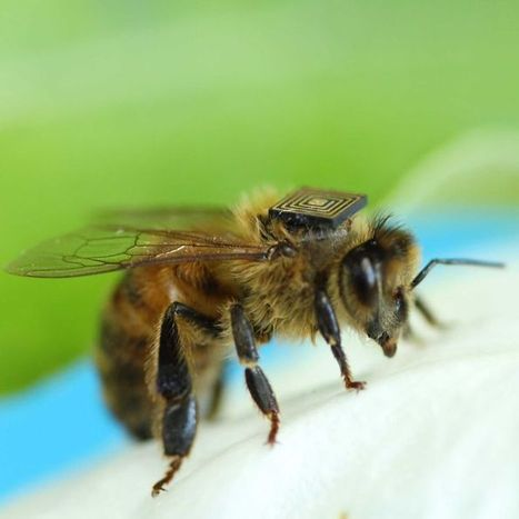 Scientists 'e-tag' honey bees to track population decline | Psychology | Scoop.it