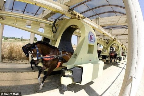 Space-age racehorse training track set for construction | Horse Racing News | Scoop.it