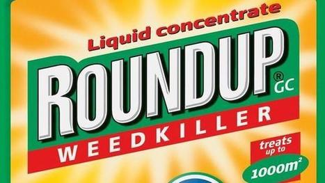 France bans sale of weedkiller Roundup over UN fears it may be carcinogenic | Daily News Reads | Scoop.it