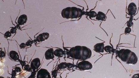 Ants in space grapple well with zero-g | Knowmads, Infocology of the future | Scoop.it