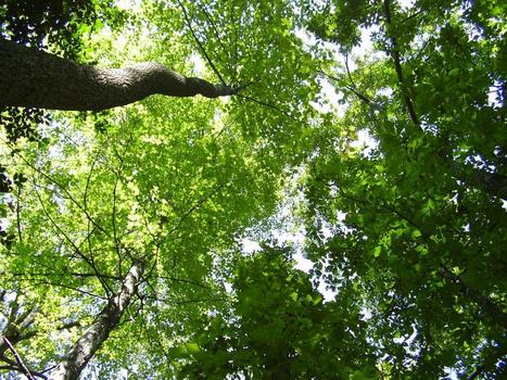 Eastern forests use up nitrogen in soil during earlier, greener springs | Gaia Diary | Scoop.it
