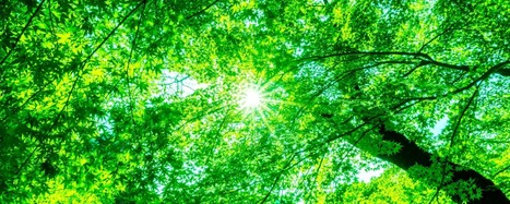 Eating the Sun: Can Humans Be Hacked to Do Photosynthesis?   Truth and Consequences   Scoop.it