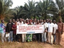Peasant farmers launch series of occupations on Socfin's plantations | Daraja.net | Scoop.it