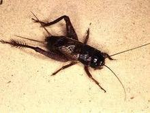 Bugs---It's What's for Dinner | News Radio 1200 WOAI | Entomophagy: Edible Insects and the Future of Food | Scoop.it