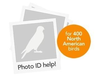 Photo ID — BETA   Merlin Bird ID app – Instant Bird Identification Help for 400 North American birds   Learning & Education Technology Tools   Scoop.it