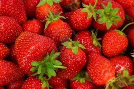 Sorbet aux fraises | Fraise | Scoop.it
