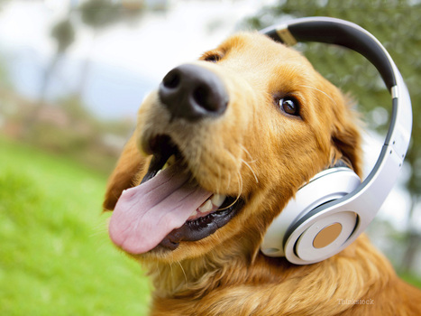 Protecting Your Dog from Loud and Scary Sounds | In Your Pet's Best Interest | Scoop.it