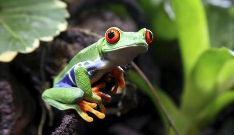 Deadly virus poses fresh threat to amphibians   sustainability and resilience   Scoop.it