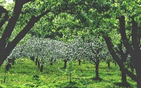 It's not a fairytale: Seattle to build nation's first food forest | ThriveLiving | The future of food health and agriculture | Scoop.it