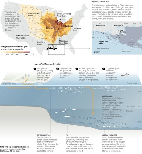 Gulf Oil Spill - The Effects on Wildlife - Interactive Graphic - NYTimes.com | Oil Spills | Scoop.it