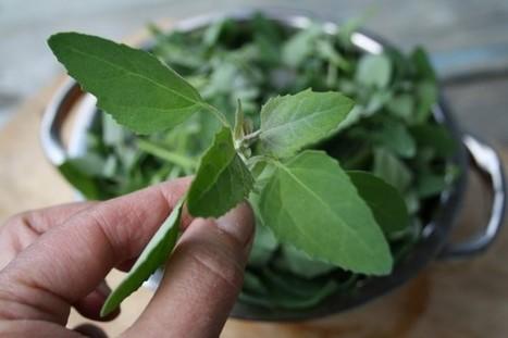 Plantes sauvages comestibles en alimentation vivante – Crudivorisme.com | Food Sciences and Technology | Scoop.it