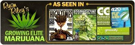 How To Grow Marijuana Indoors / Outdoors, Guide, Weed Growing | Growing Marijuana | Scoop.it