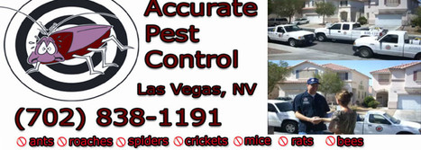 Reliable pest control services given by Accurate Pest Control | Pest Control Service | Scoop.it