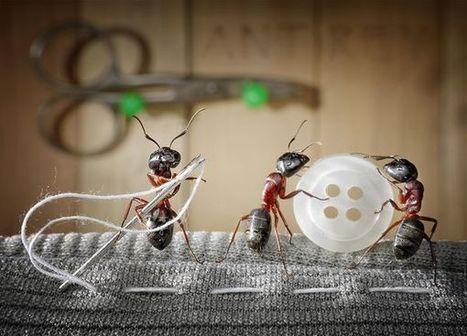 Top 25 des mises en scène de fourmis les plus improbables | Le flux d'Infogreen.lu | Scoop.it